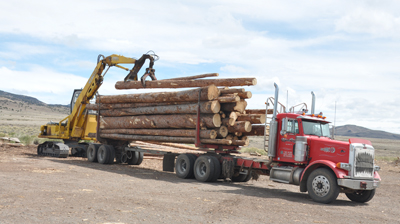 Trees are harvested and brought to the mill: Rocky Mountain Timber Products, Del Norte, Colorado